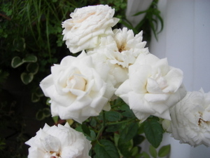 20068_060